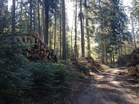 2016-04-11-fruehlingswald-0
