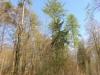 2011_04_08_1579-fruehlingswald