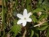 2012_03_28_1291-waldflora