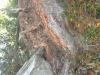 2011_10_03_274-wurzelwunder
