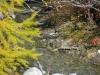 2011_10_03_296-waldbach