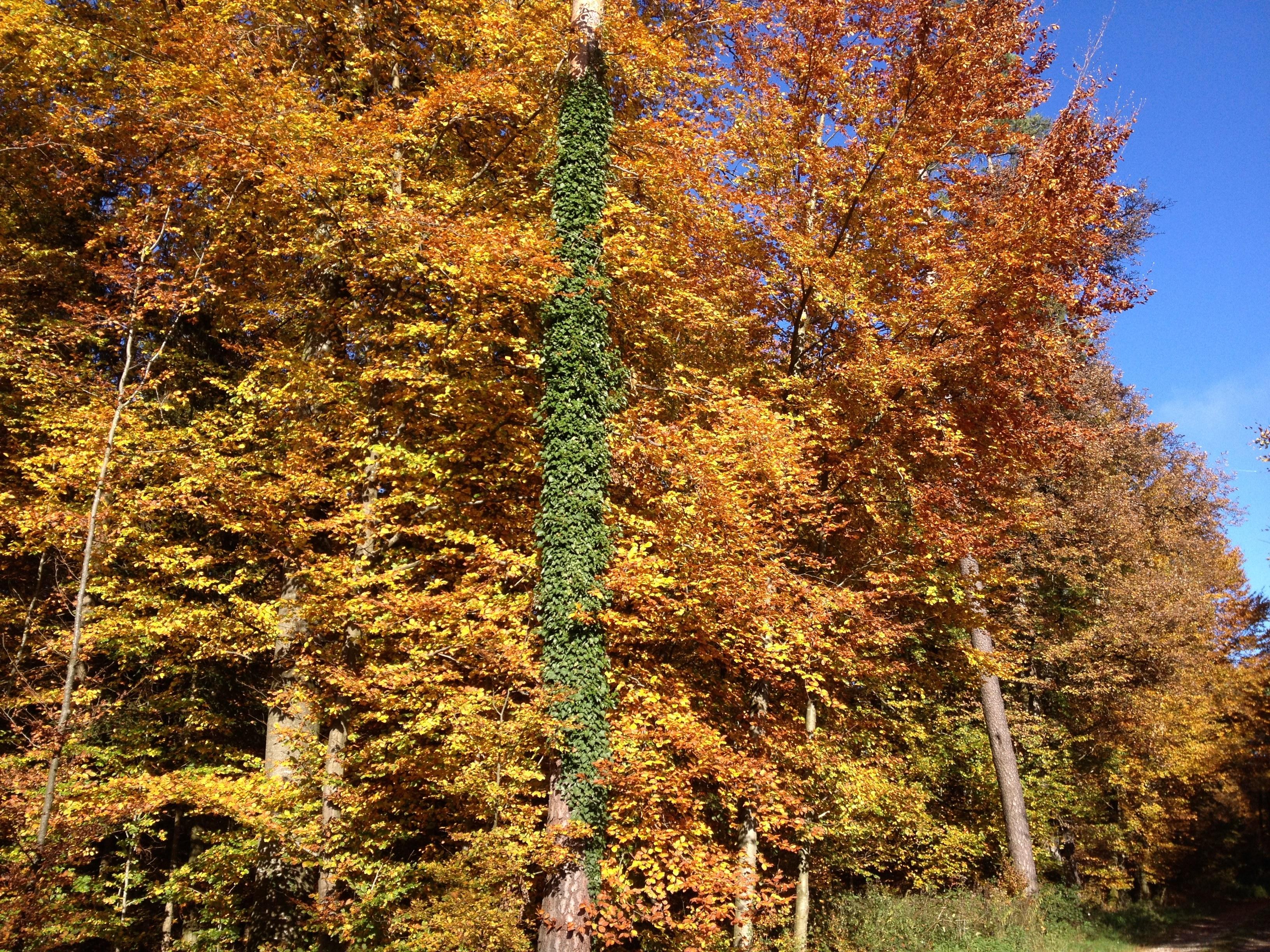 _2013_10_24_Herbstwald 07