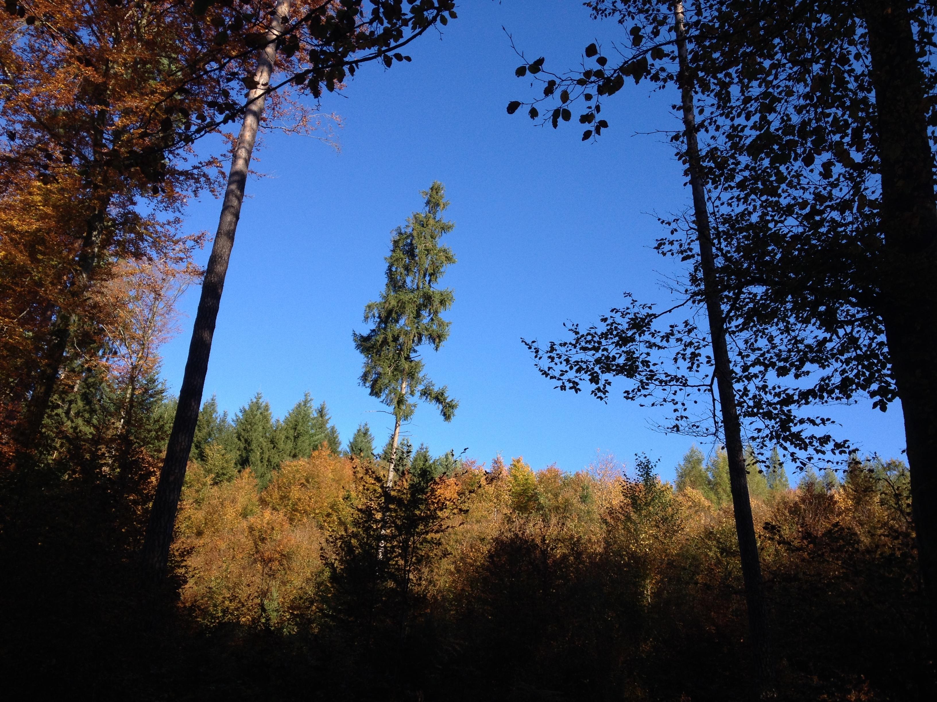 _2013_10_24_Herbstwald 12