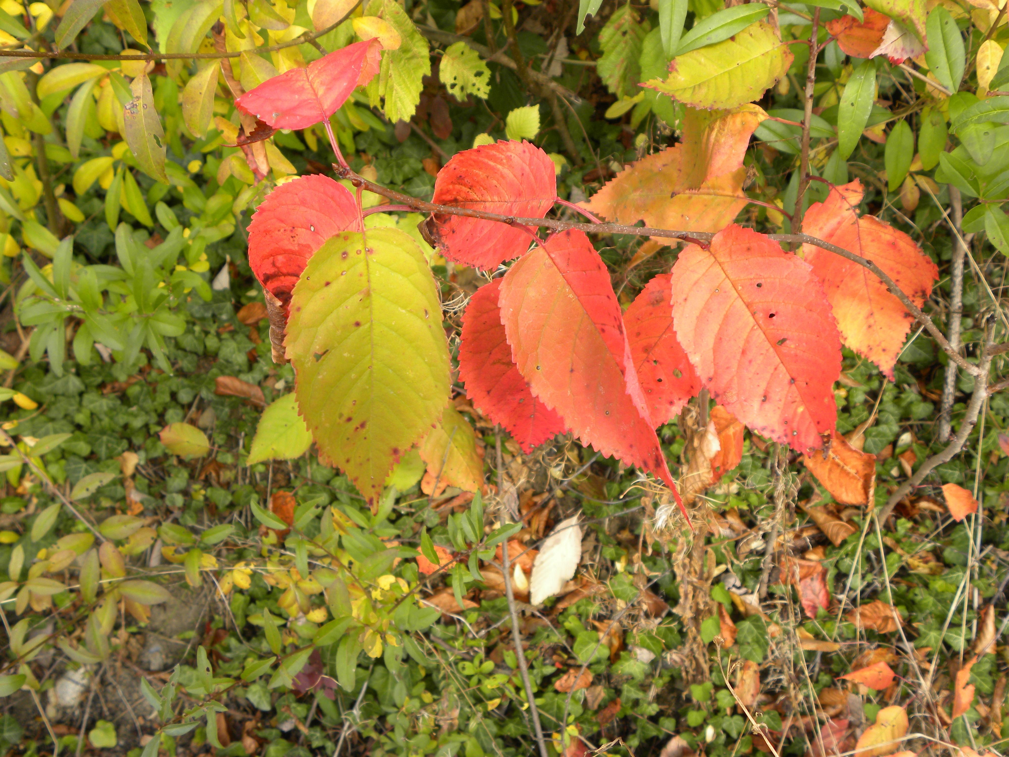 2015-10-04-Herbstwald A