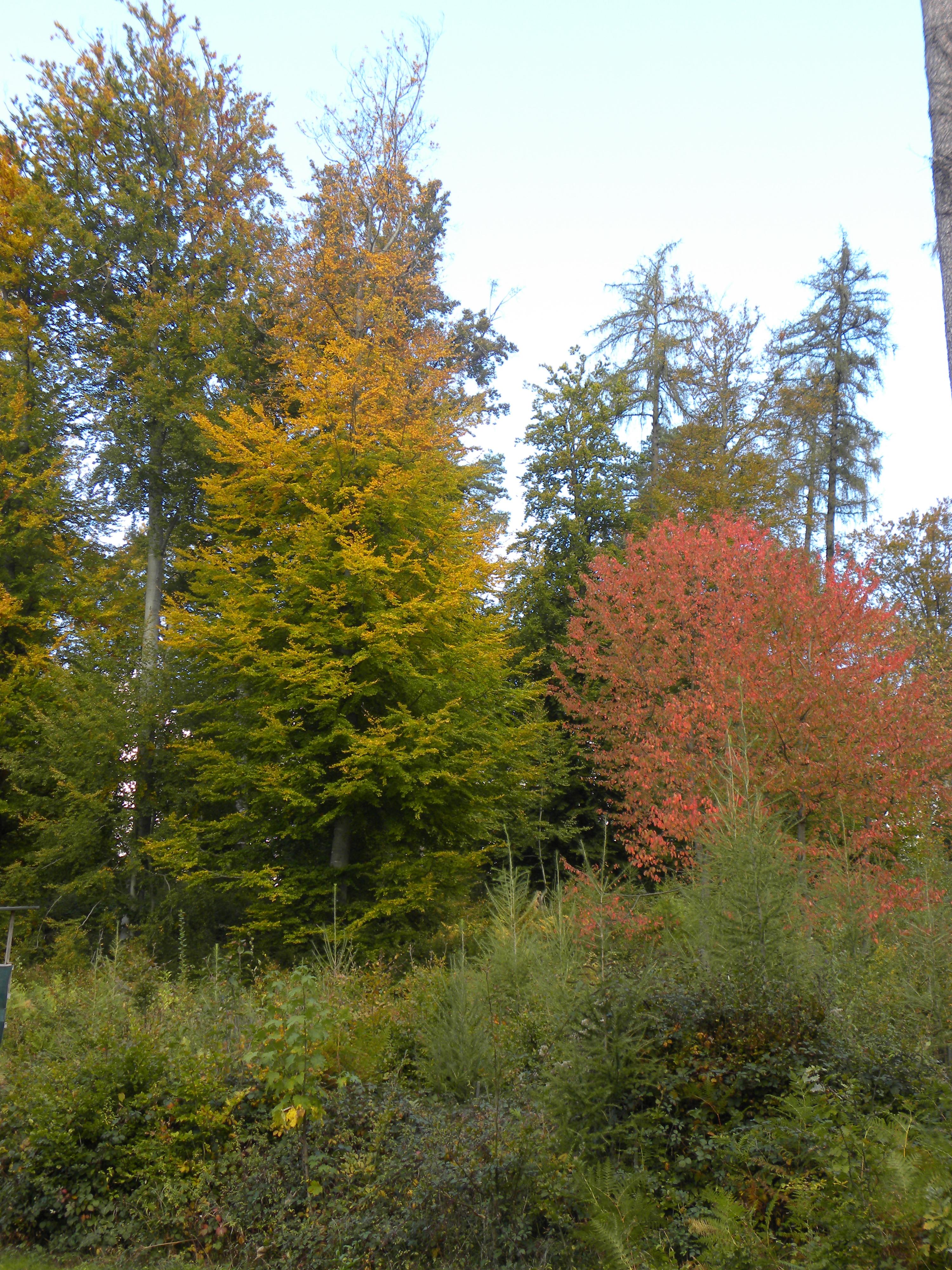 2015-10-04-Herbstwald K