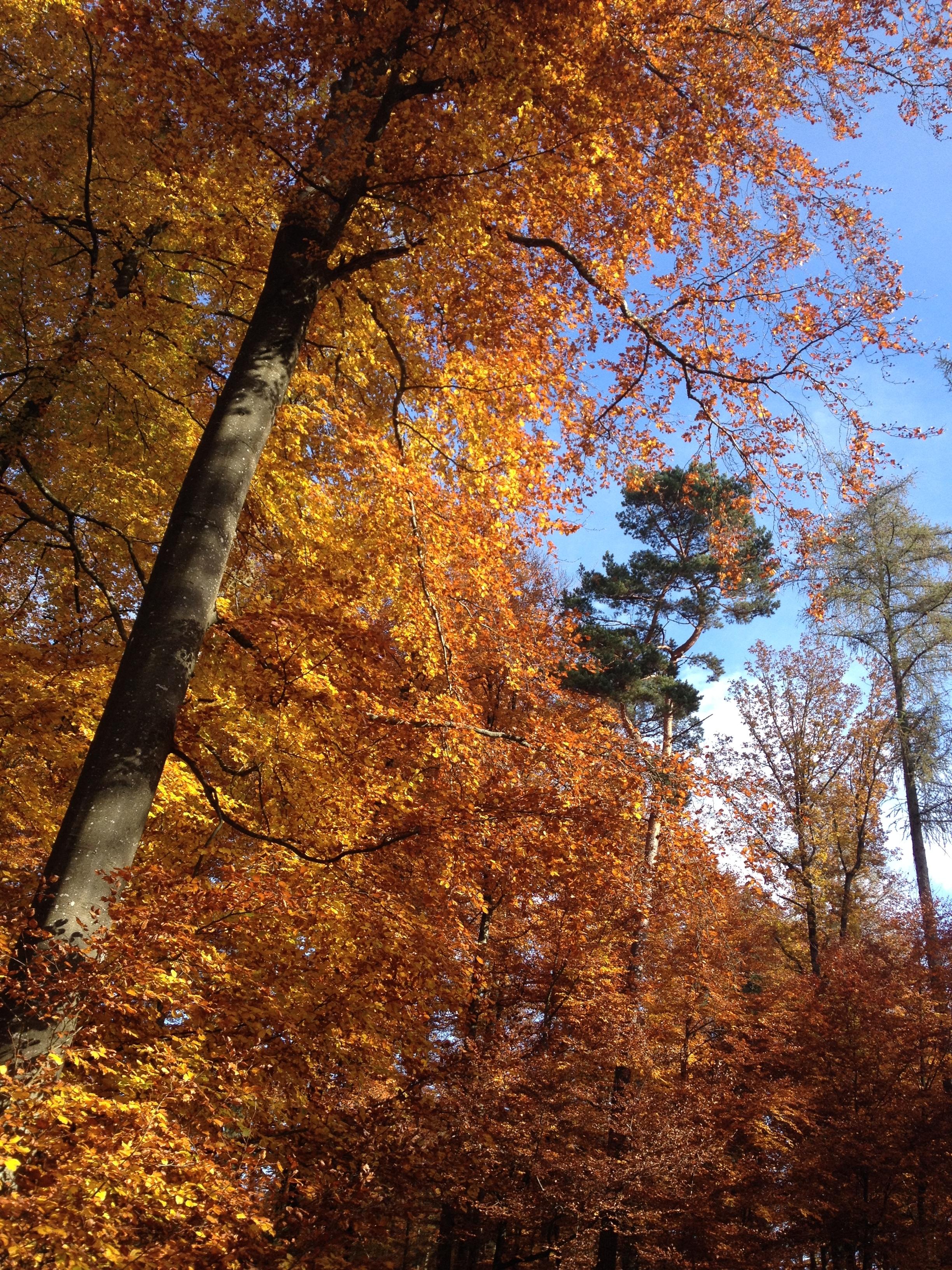 2015-10-28-Herbstwald 03