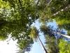 K800__2009_09_30-Waldsicht