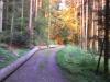 K800__2012_05_28_-Morgengrauen-im-Wald-1