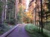K800__2012_05_28_-Morgengrauen-im-Wald-2