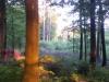 K800__2012_05_28_-Morgengrauen-im-Wald-3