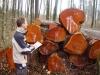 2009_03_26-rundholzverkauf