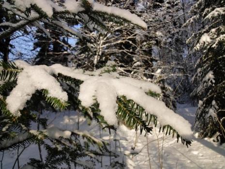 2012_12_12_winterwald-20