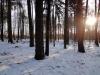 2012_02_05_1338-winterwald
