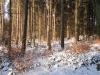 2012_02_05_1339-winterwald