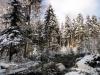 2012_12_12_holzernte-im-schnee-1