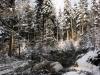 2012_12_12_holzernte-im-schnee