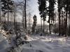 2012_12_12_winterwald-01