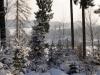 2012_12_12_winterwald-02
