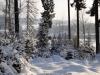2012_12_12_winterwald-03