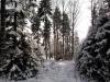 2012_12_12_winterwald-04