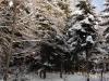 2012_12_12_winterwald-05