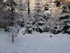 2012_12_12_winterwald-07