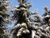 2012_12_12_winterwald-08