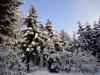 2012_12_12_winterwald-09