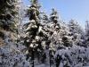 2012_12_12_winterwald-10