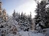 2012_12_12_winterwald-11