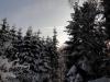 2012_12_12_winterwald-12