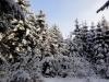 2012_12_12_winterwald-13
