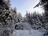 2012_12_12_winterwald-14
