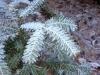 2013_12_17_-winter-im-wald-0