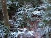 2013_12_17_-winter-im-wald-02