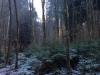 2013_12_17_-winter-im-wald-05